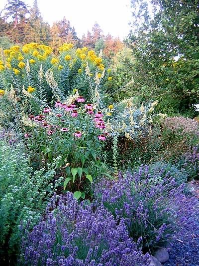 August-garden