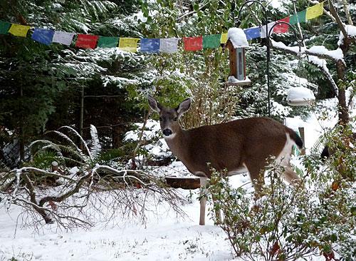 Deer-flags