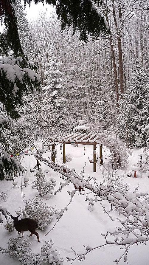 Snowfall121708