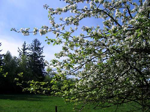 Island-spring