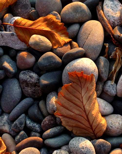 Stones-leaves