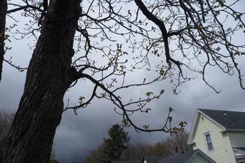 Tree-storm